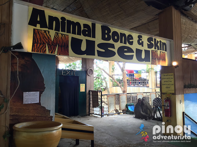 Things to do in Pampanga Zoocobia Fun Zoo