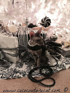 Coco the Cornish Rex under Christmas Tree in NYC