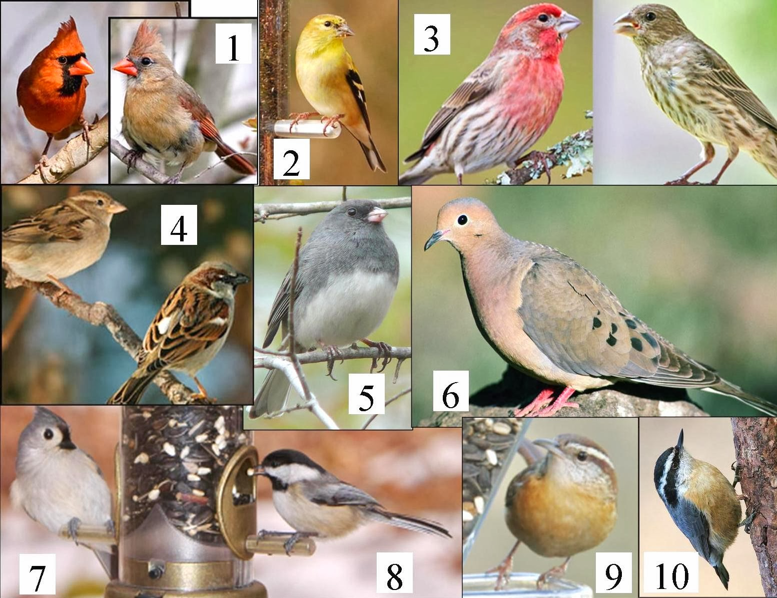 Wild Birds Unlimited: Common Michigan birds I can see at ...