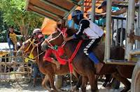 Lomba Pacuan Kuda Berakhir, Penjabat Walikota Apresiasi Kiprah Pordasi Kota Bima