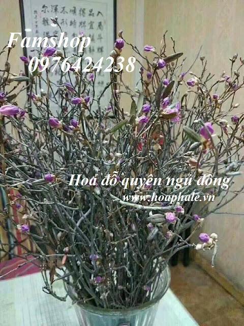 Hoa do quyen ngu dong tai Son Tay