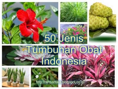 50 Jenis Tumbuhan Obat Indonesia