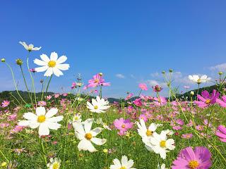 Fun & Free Daegu Travel: Autumn Scenery Of Hajungdo Island With ...