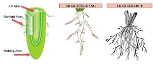 Struktur dan Fungsi Bagian Tumbuhan