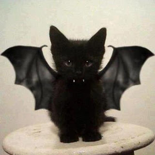 adorable cat bat