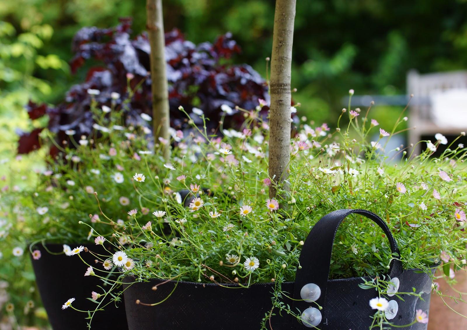 Fra frø til blomst: Bunddækkeplanter i krukker