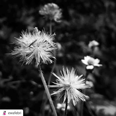 mobile photography ideas wild flower
