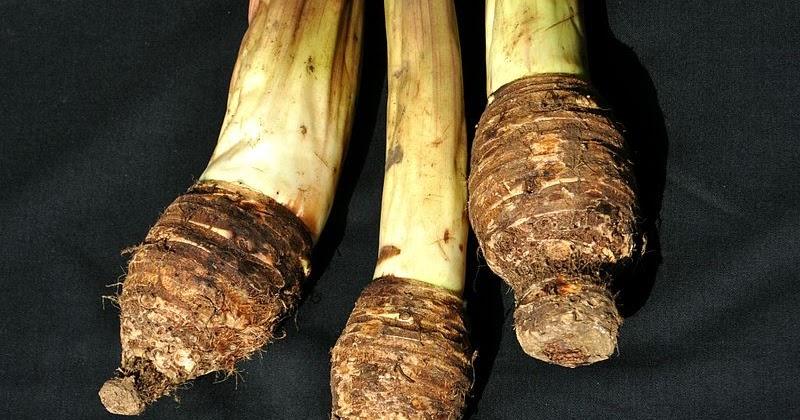 Contoh Proposal Usaha Makanan Keripik Talas | Peluang ...