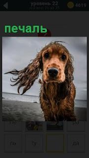 Собака мокрая на ветру на берегу водоема с печальным выражением морды