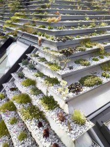 Garden In Rooftop 2