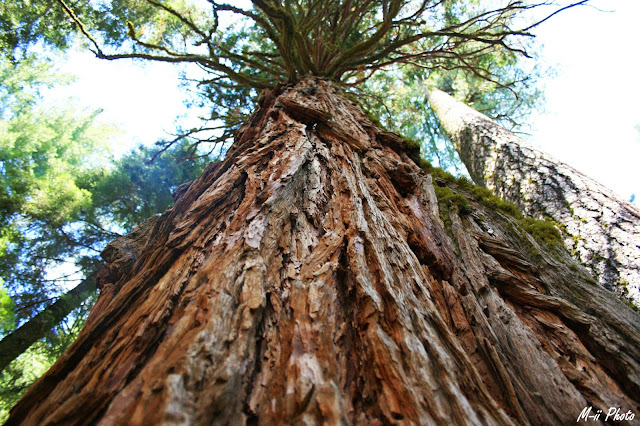 M-ii Photo : Sequoia National Park