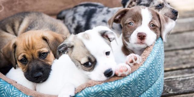 Απόφαση σταθμός στην Καλιφόρνια – Μόνο ζώα από καταφύγια επιτρέπεται να πωλούνται στα pet shops