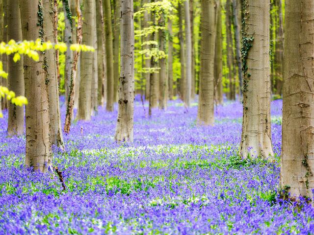 ازهار الربيع انحاء العالم