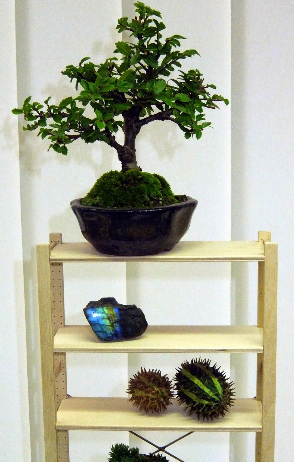 bonsai gemeinschaft mein neues bonsai regal. Black Bedroom Furniture Sets. Home Design Ideas