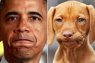 Dogs That Look Like Celebrities Are The Funniest Thing Ever