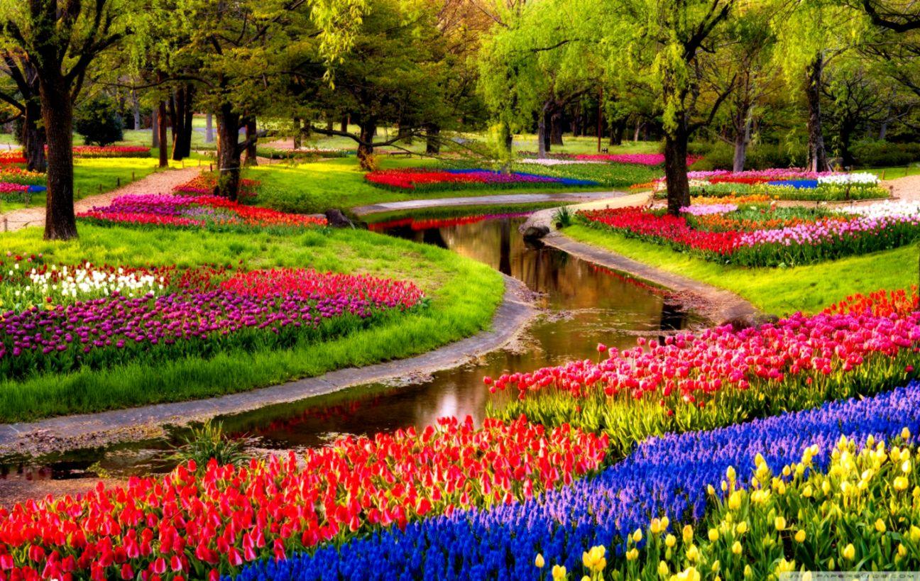 Garden Desktop Hd Wallpaper Free Download Safari Wallpapers