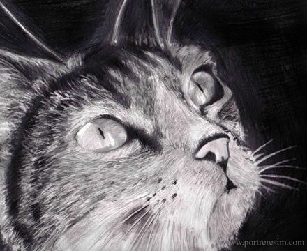 Karakalem Çalışmaları Kedi Resmi