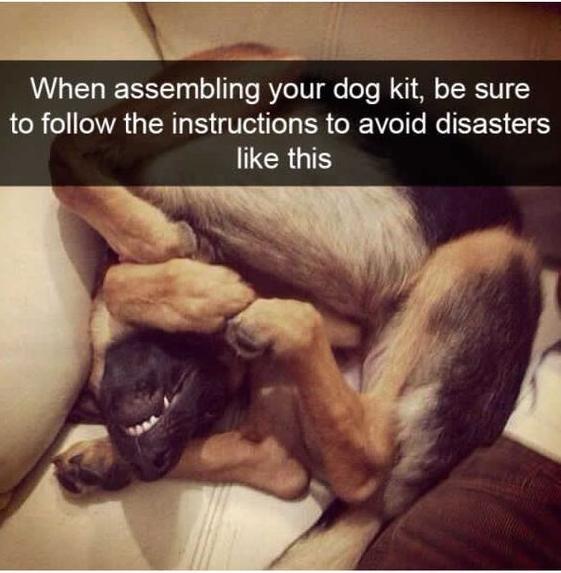 Best Dog Memes Viral Online 5