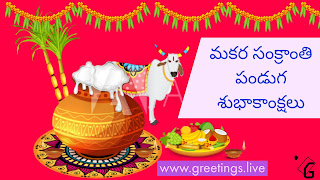 Latest colour  Makara Sankranti wishes HD Image