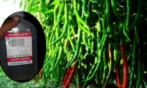Cairan Infus Penyubur Tanaman Sayuran