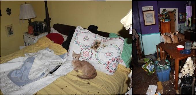 Una familia tenía 26 gatos muertos en la nevera y otros 18 vivos en una casa de Rhode Island