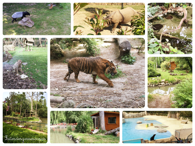 Notre fabuleux week end en famille au zoo de beauval for Appart hotel zoo de beauval