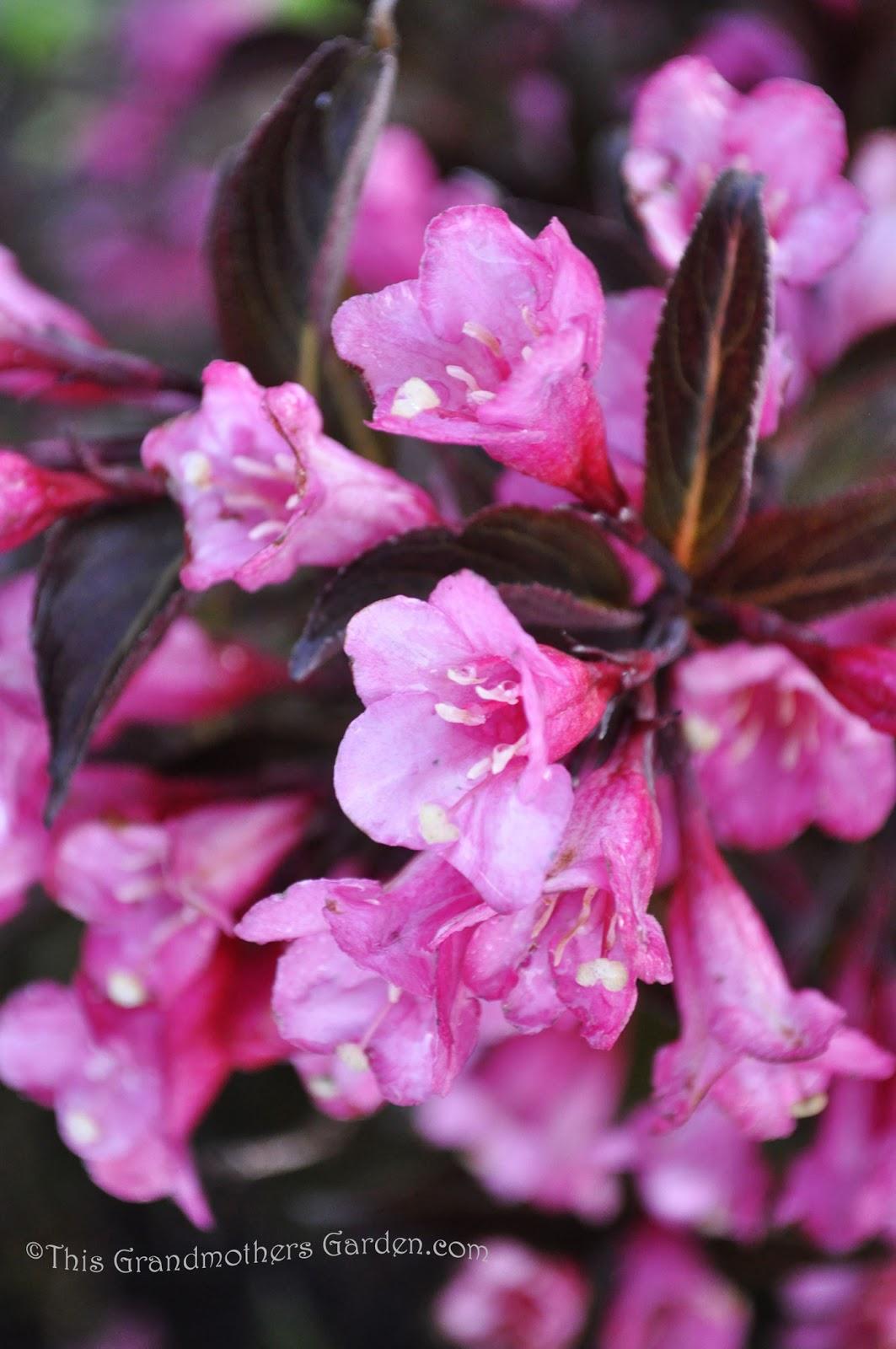 This Grandmother S Garden We Bloom Too