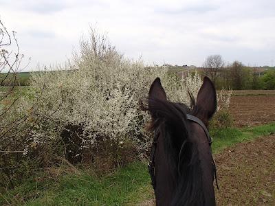 Konie, jazda konna, jazda konna wiosna, pensjonat dla koni koło Krakowa, czy konie lubią świeżą trawę, czy pozwalać koniowi na jedzenie trawy podczas jazdy
