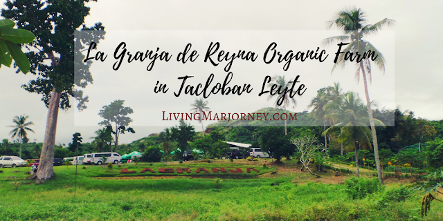 Tacloban After Haiyan: La Granja De Reyna Farm