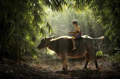 Gambar Pemandangan Alam di Desa Indonesia Suradita Jawa Barat Keindahan Alami