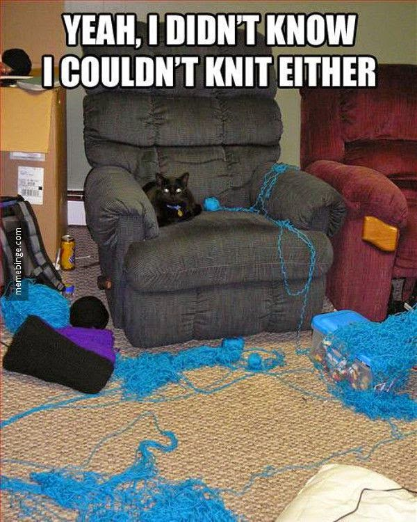 Funny Knitting Cat Joke Picture - Yeah, I didn't know I couldn't knit either