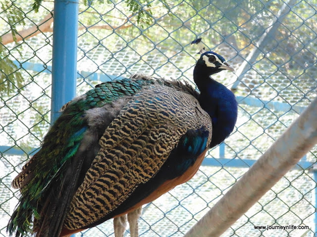 Gulbarga Government Zoo, Karnataka