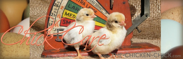 Chick Care at www.The-Chicken-Chick.com