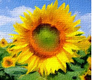 https://amajeto.com/games/sunflowers_room/