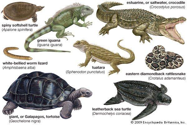 Imágenes Reptiles