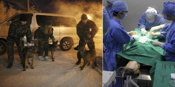 Η Ρωσία αποκαλύπτει τα κλωνοποιημένα σκυλιά του πολέμου