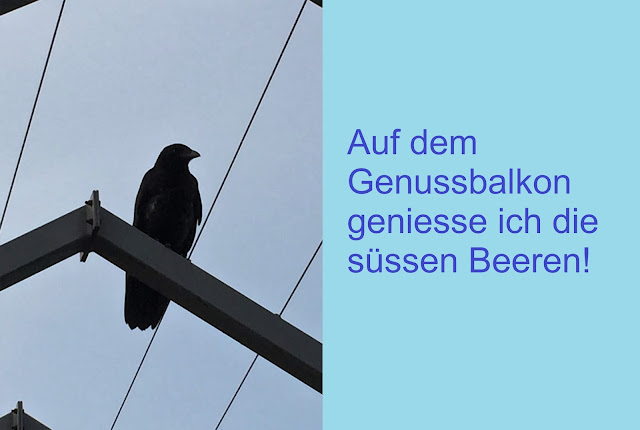 Krähe auf dem Genussbalkon