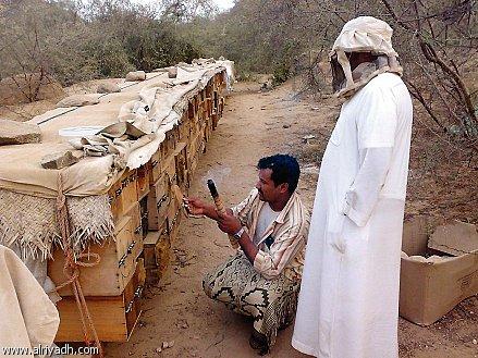Το Μπασκορτοστάν της Ρωσίας θα εξάγει μέλι στην Σαουδική Αραβία...