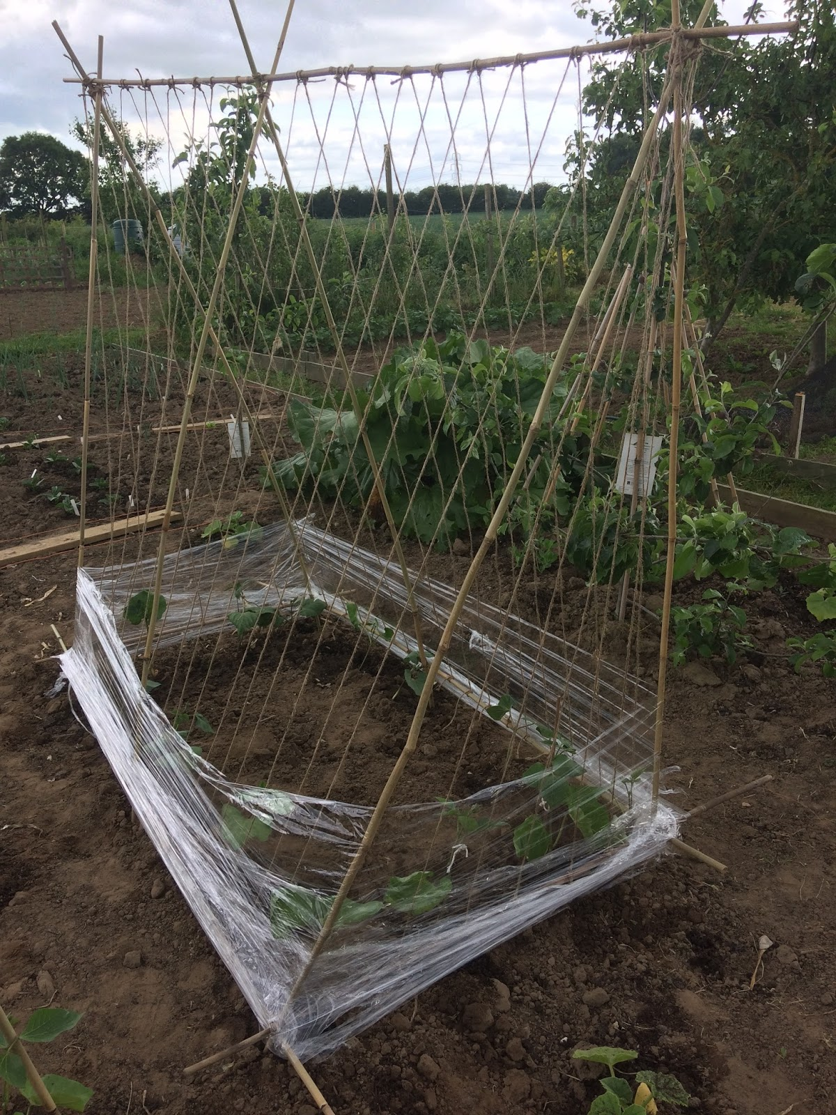 40 Plus and All is Well: Organic garden update - building bean ...