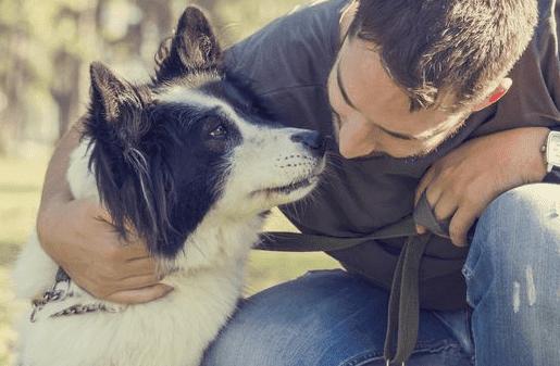 Memiliki Anjing