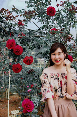 hình ảnh hoa hồng cổ sơn la