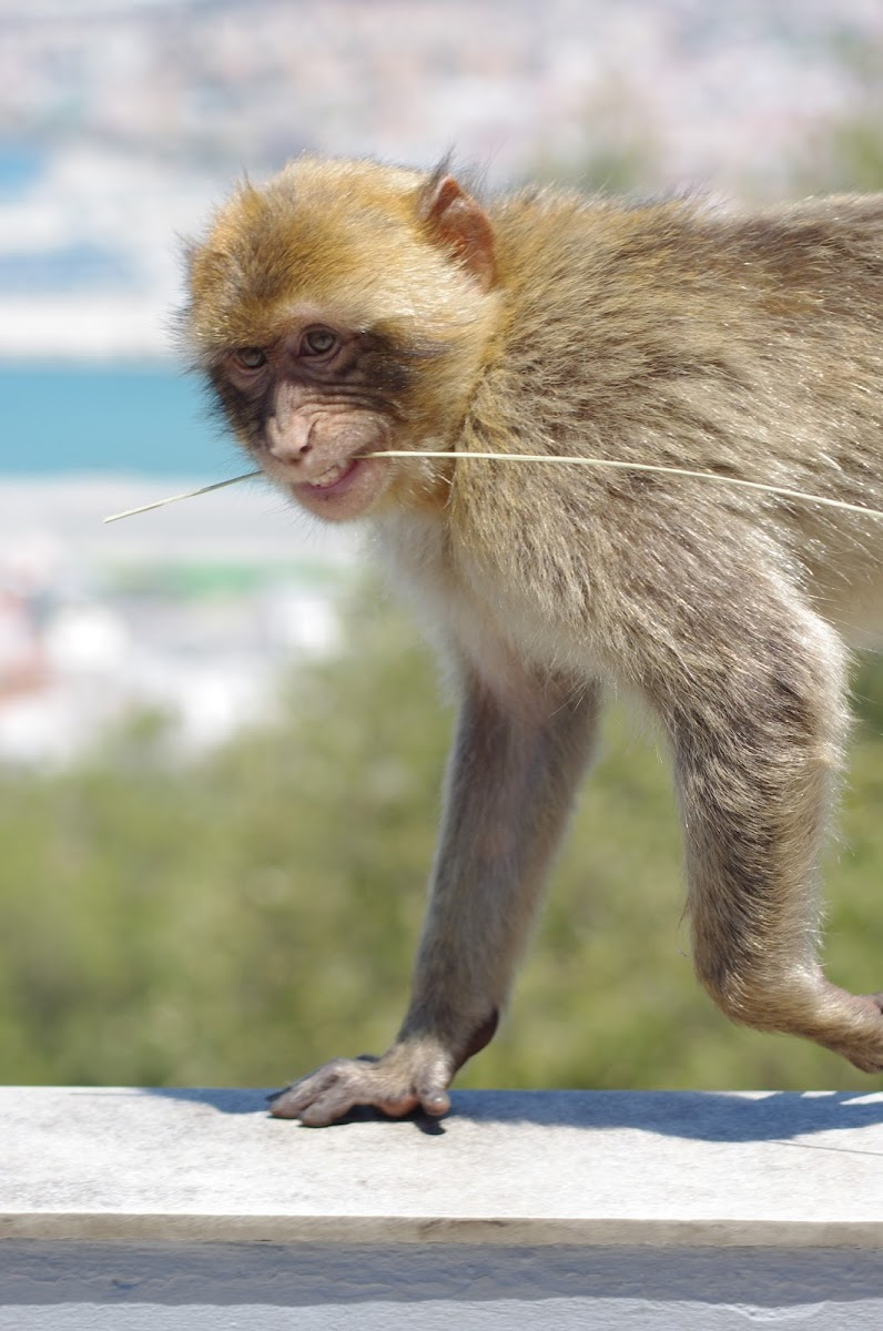 Gibraltar travel series holiday Spain apes