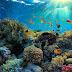 Pengertian Ekosistem Beserta Jenis dan Contohnya