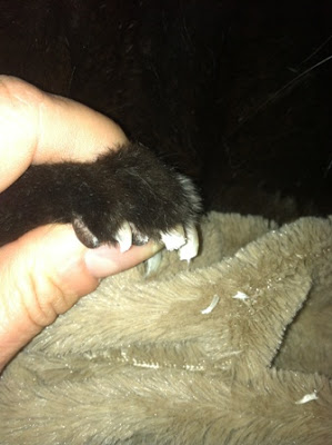Sedating a cat to trim nails
