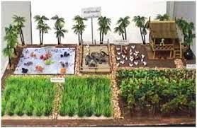 การปลูกพืช