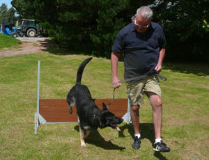Cloe jumping over a hurdle with Chris holding onto her lead