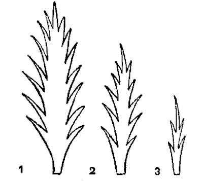 как сделать листья пальмы