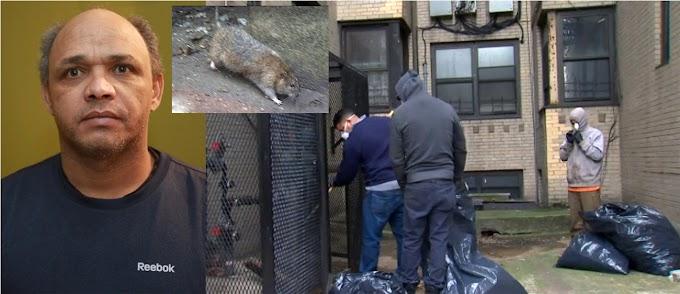 Dominicano sobrevive a grave contagio de leptospirosis por invasión de ratas en edificio; un muerto y otro grave