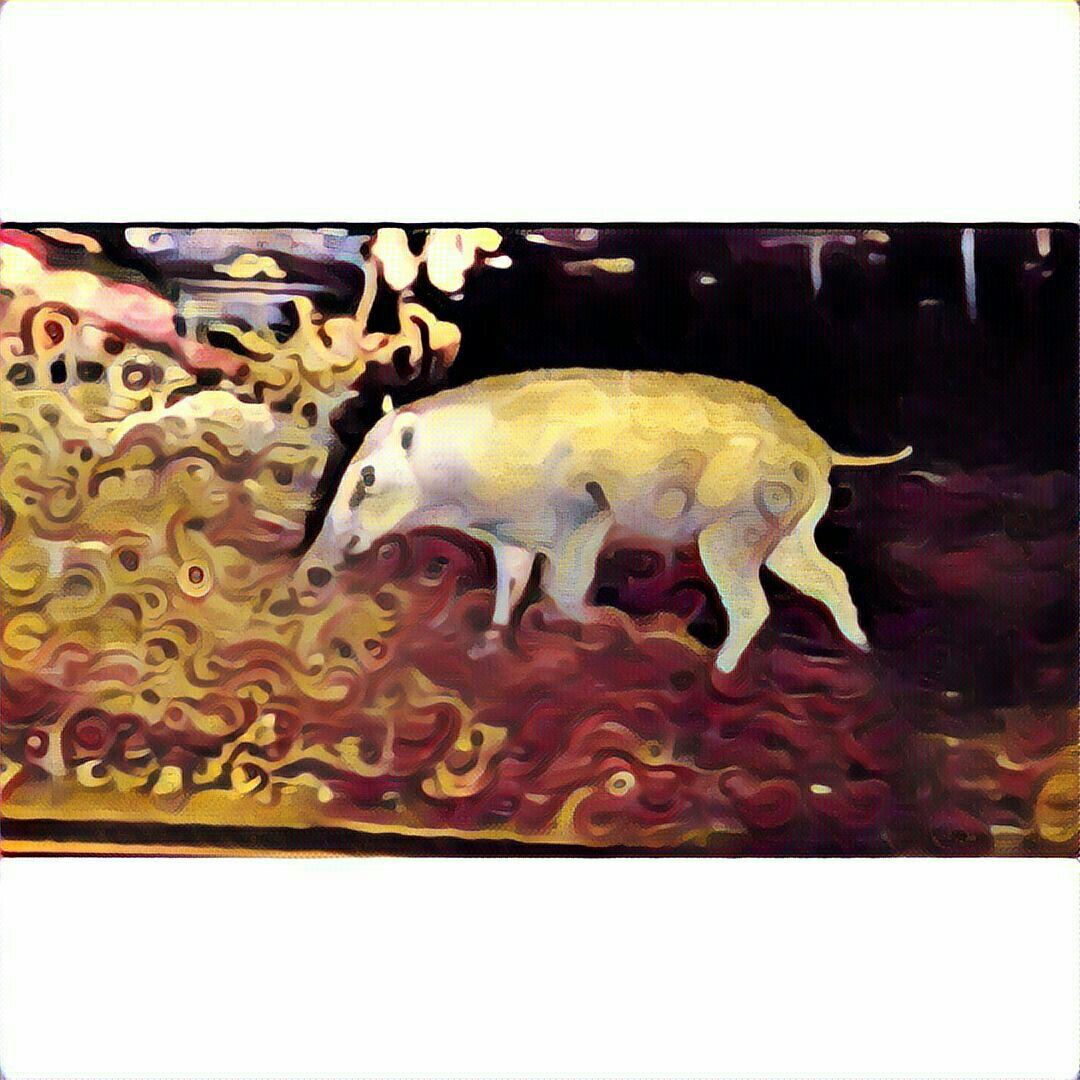 Babi Tunggal