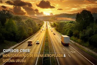 Centro Brasileiro de Ecologia de Estradas – CBEE, cbee, sistema urubu, fauna atropelada, monitoramento de fauna atropelada, curso, curso monitoramento de fauna atropelada, curso sistema urubu, dia de urubuzar, animais atropelados, extinção, rodovias, natureza, conservação, blog natureza e conservação.